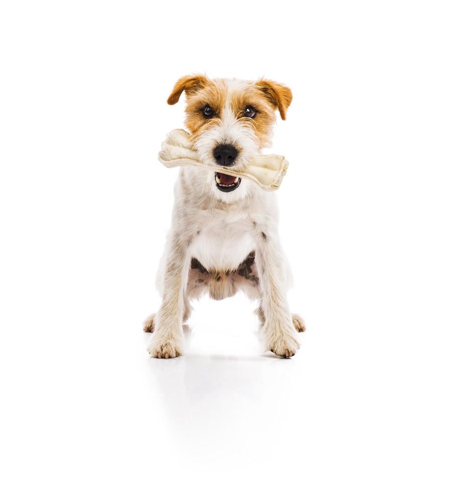 Pet Food Debunking the Myths